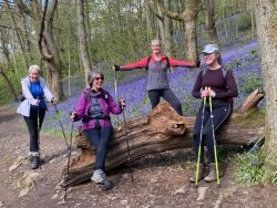 Dalesway Nordic Walking in the Bluebells