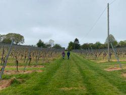 Nordic walking in a vineyard